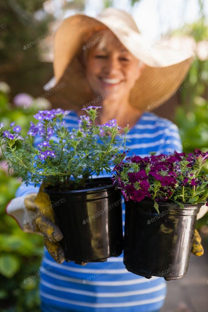 Lächelnde Senior Frau hält frische Blumentöpfe