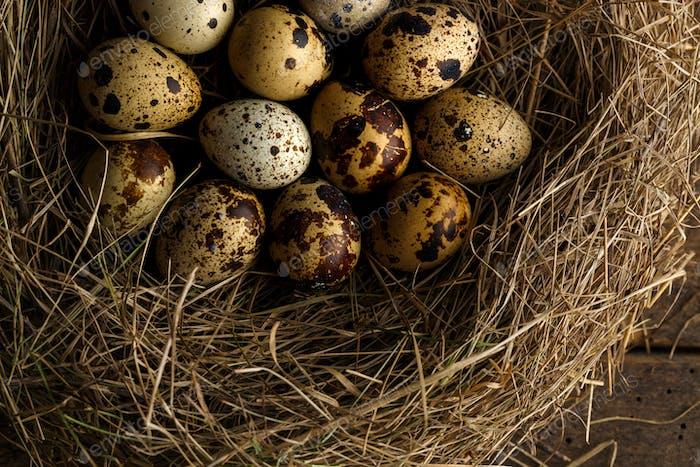 Wachteleier in einem Nest auf einem rustikalen Holzhintergrund