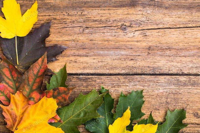 Herbstblätter auf hölzernem Hintergrund