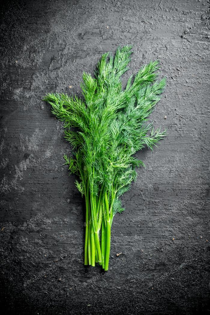 Fresh green dill.