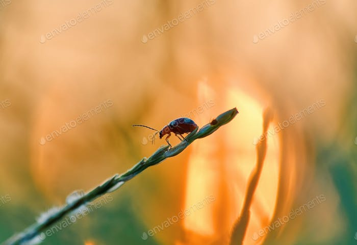 Little bug on the grass twig