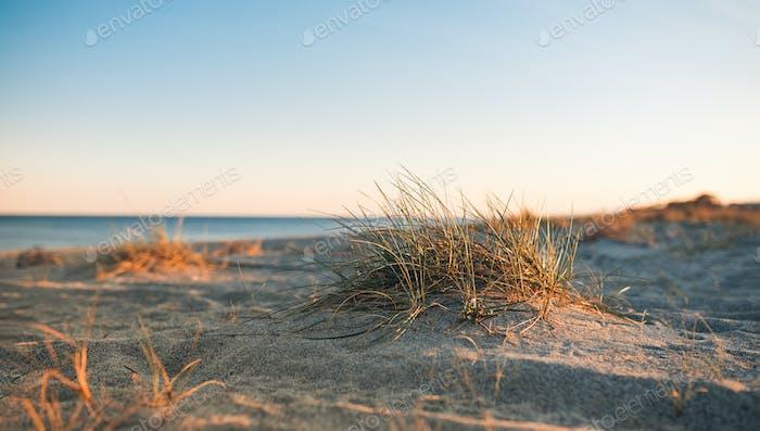 Mediterranean shrub on the beach