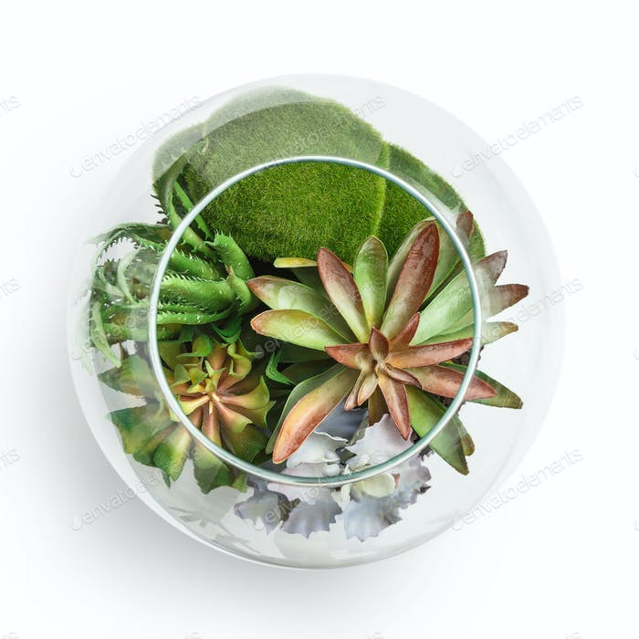 Home mini garden concept, top view