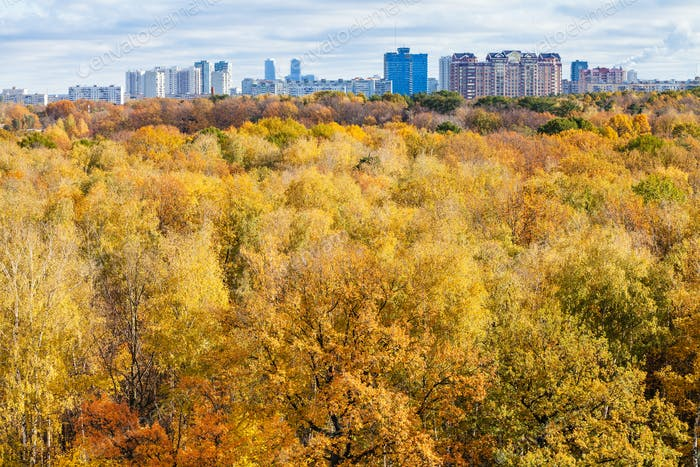 yellow trees in forest and city on horizon in autumn
