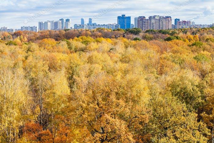gelbe Bäume in Wald und Stadt am Horizont im Herbst