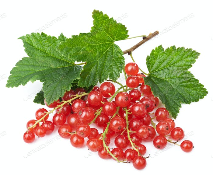 fresh red currant isolated