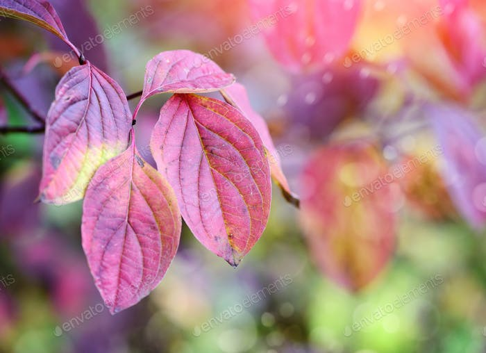Tree branch with autumn leaves. Autumn background.