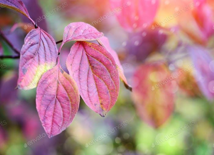 Rama de Árbol con hojas de otoño. Fondo otoñal.