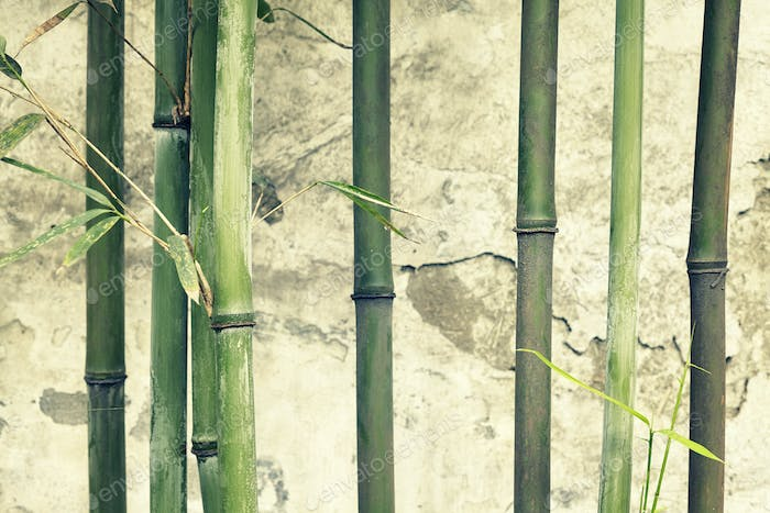 Bamboo branches against old weathered wall.