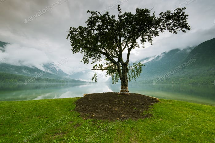 Lonely tree with lake and mountains in background