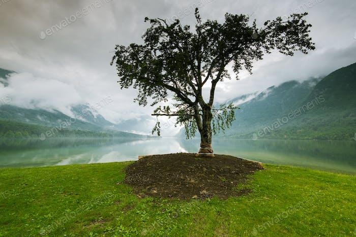 Einsamer Baum mit See und Bergen im Hintergrund