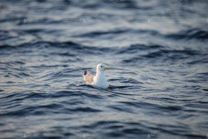 Vogel auf Meerwasser