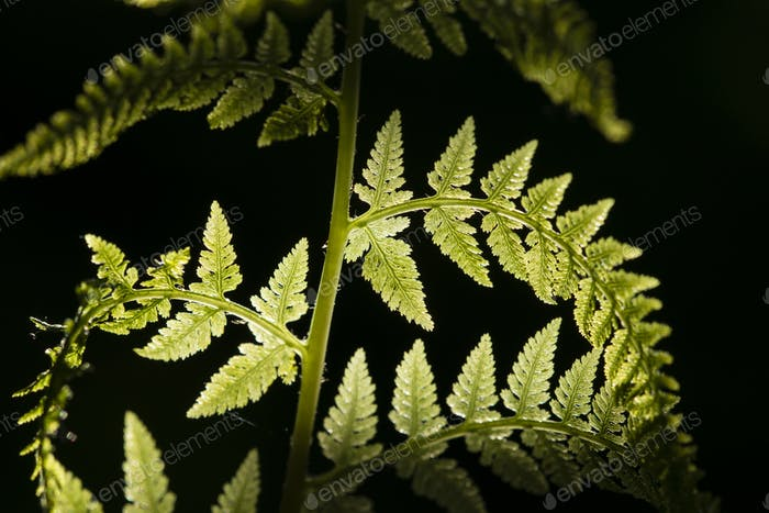 Detail of fern leaves