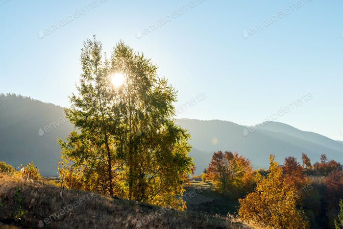 Beautiful landscape with magic autumn trees and fallen leaves