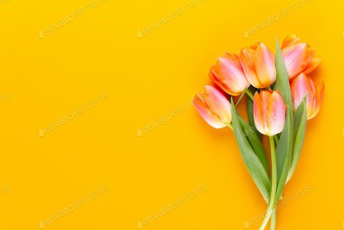 Gelbe Pastellfarbe Tulpen auf gelbem Hintergrund.