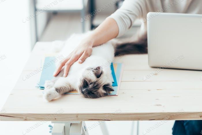 Happy cat relaxing on a desk