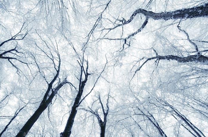 Frozen branches background