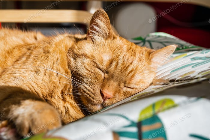 Large orange cat sleeping on a chair
