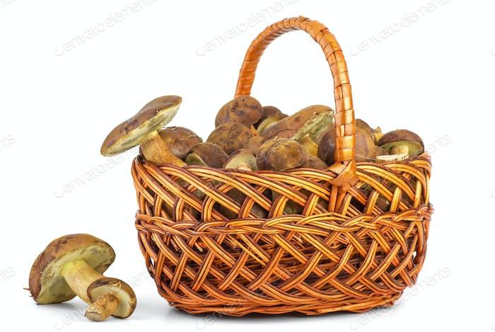 Basket with cepe mushrooms