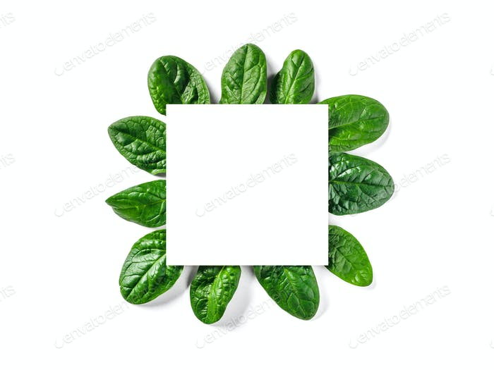 White paper square on shpinach leaves