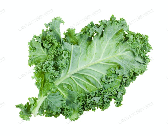 single green leaf of curly-leaf kale isolated