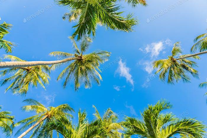 Beautiful tropical coconut palm tree on blue sky white cloud around beach sea ocean