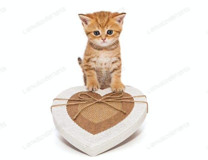 Little kitten British  and a box