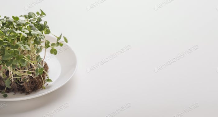 Sprouted seeds with soil on plate over white background