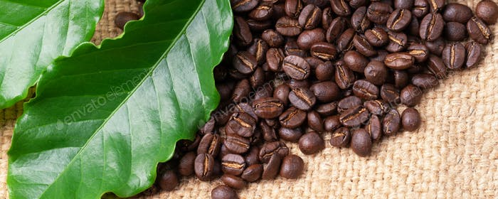 roasted coffee bean with leave on linin sack