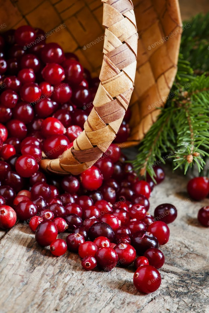 Fresh cranberries in a wicker basket with fir branches