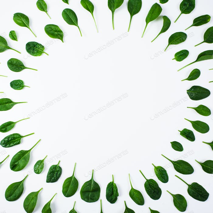 Spinach pattern on white background. Top view