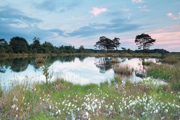 spring evening on wild lake