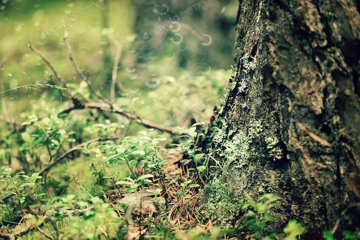 Waldbaumwurzeln und Rinde. Abstrakte Holzstruktur und Hintergrund mit Kopierraum