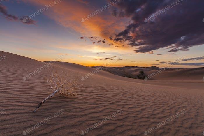 Schöne Aussicht auf die Wüste Gobi. Mongolei