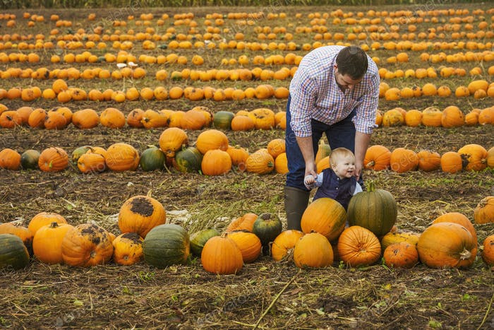 A man and a boy toddler among rows of bright yellow, green and orange pumpkins in autumn.