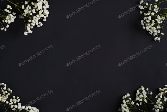 Frische Blütenzweige von Gypsophila Pflanze als Eckgrußrand auf schwarzem Hintergrund. Ansicht von oben
