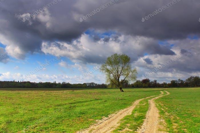 Baum in der Nähe der Autobahn im Feld