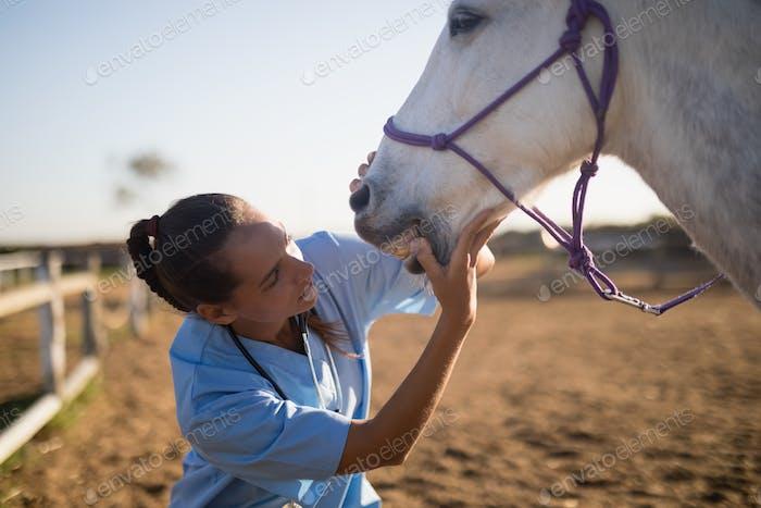 Veterinario Mujer examinando boca de caballo