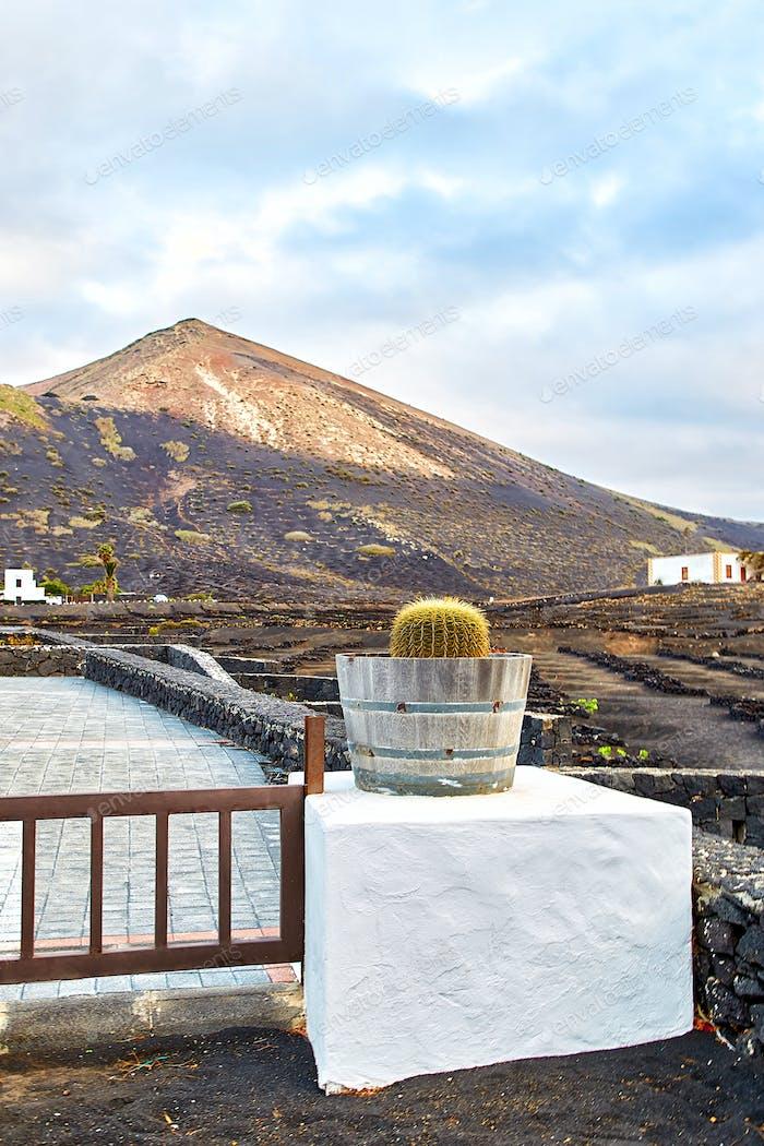 Vineyards in La Geria, Lanzarote Island