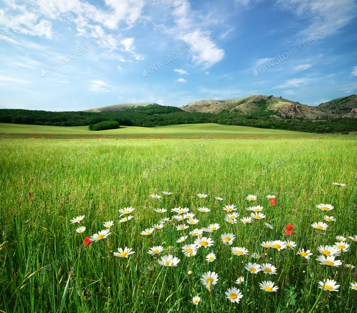 Beautiful meadow landscape