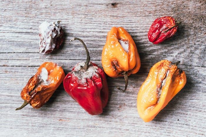 Schimmelige und faltige faule Paprika. Konzept von ungesundem, zersetztem, verdorbenem Gemüse. Mülldeponie