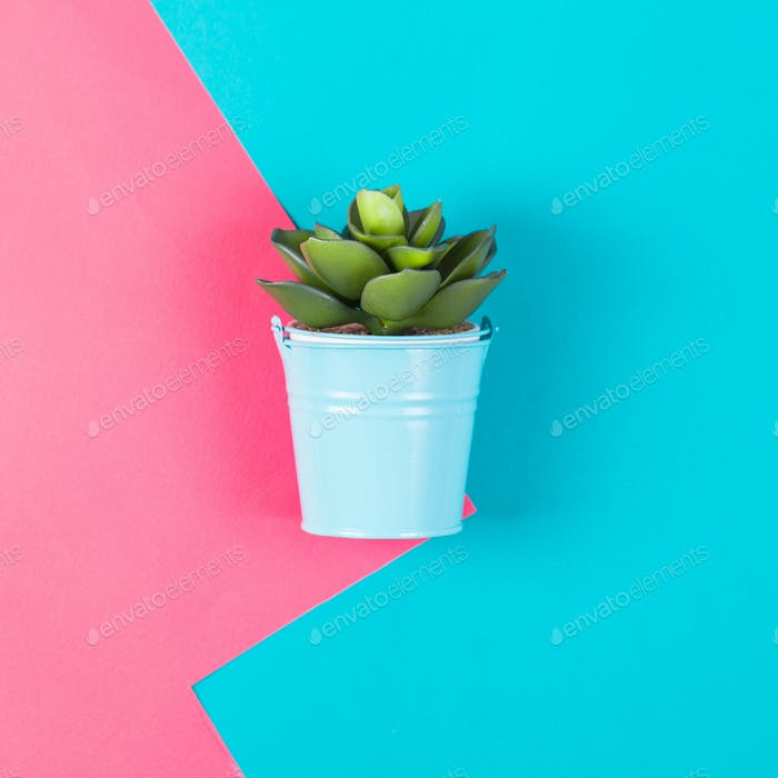 Artificial plant on a blue pink background. Minimal