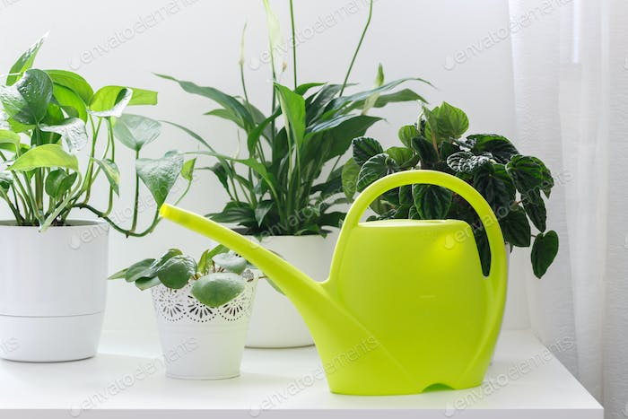 House plants and watering can
