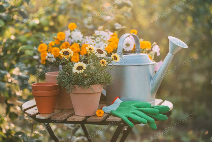 Gardening. Various potted flowers and a metal watering can on the garden table