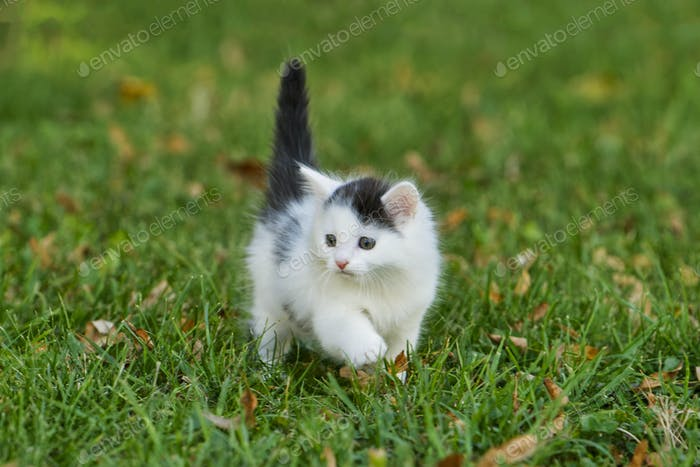 Little white kitten playing on the grass