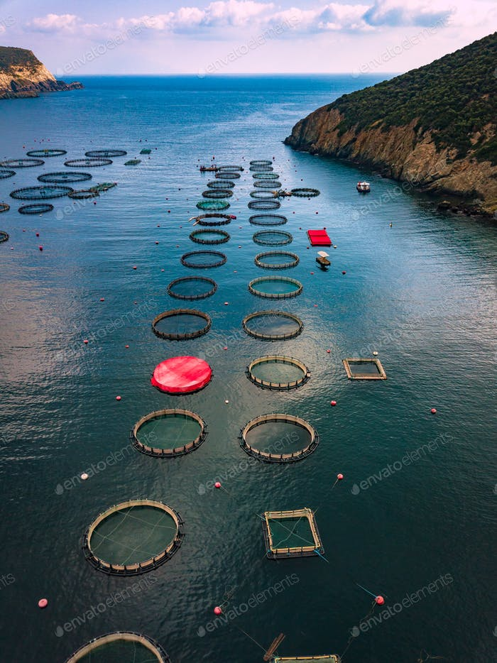 Thumbnail for Salmon fish farm with floating cages. Aerial view