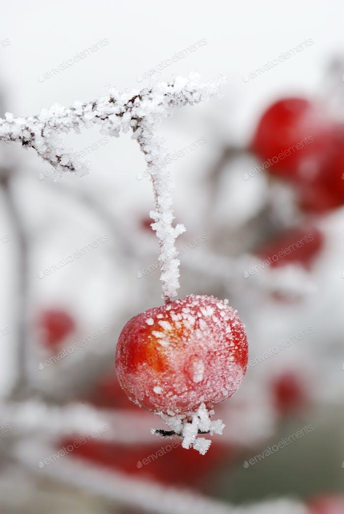 Frozen red apples