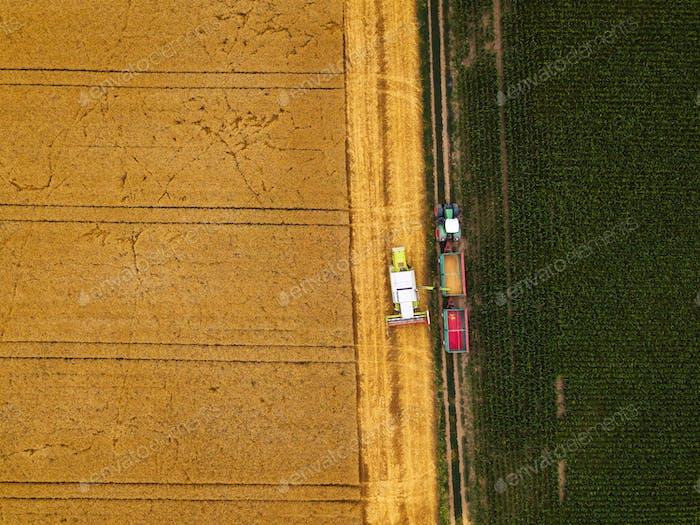 Luftaufnahme der Mähdrescher Entladen von geerntetem Weizen
