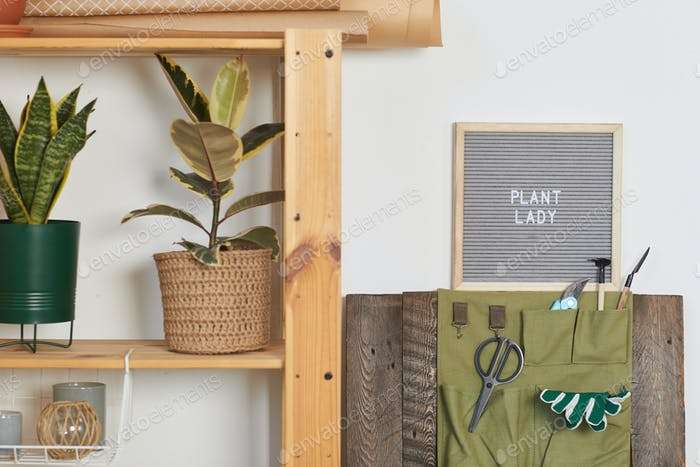Grüne Zimmerpflanzen Hintergrund