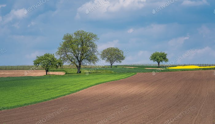 South Moravia landscape and farmland at sunrise